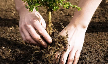 Tree Planting in Overland Park KS Tree Planters in Overland Park KS Tree Services in Overland Park KS