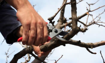 Tree Pruning in Overland Park KS Tree Pruning Services in Overland Park KS Quality Tree Pruning in Overland Park KS