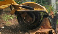 Stump Removal in Overland Park KS
