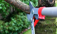 Tree Pruning Services in Overland Park KS
