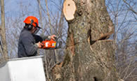 Tree Removal in Overland Park KS